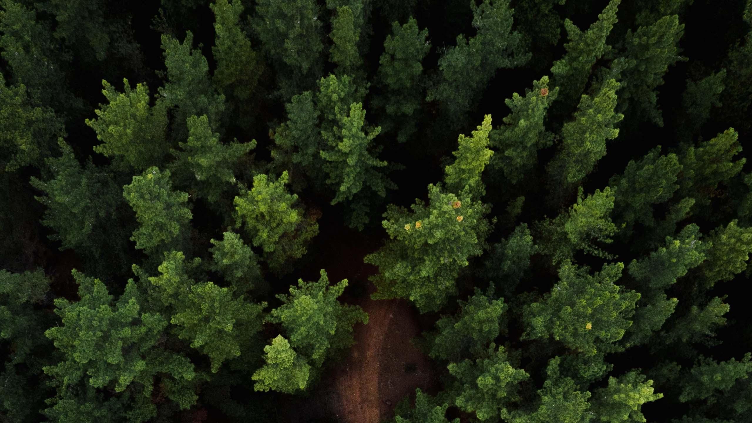 درختی کاشت شد
